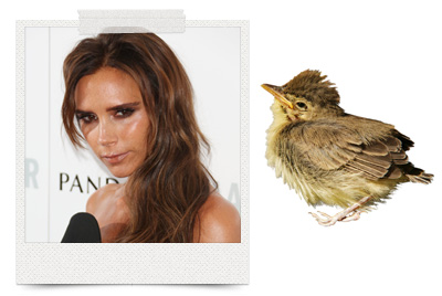 10-very-weird-celebrity-beauty-regimens-victoria-beckham